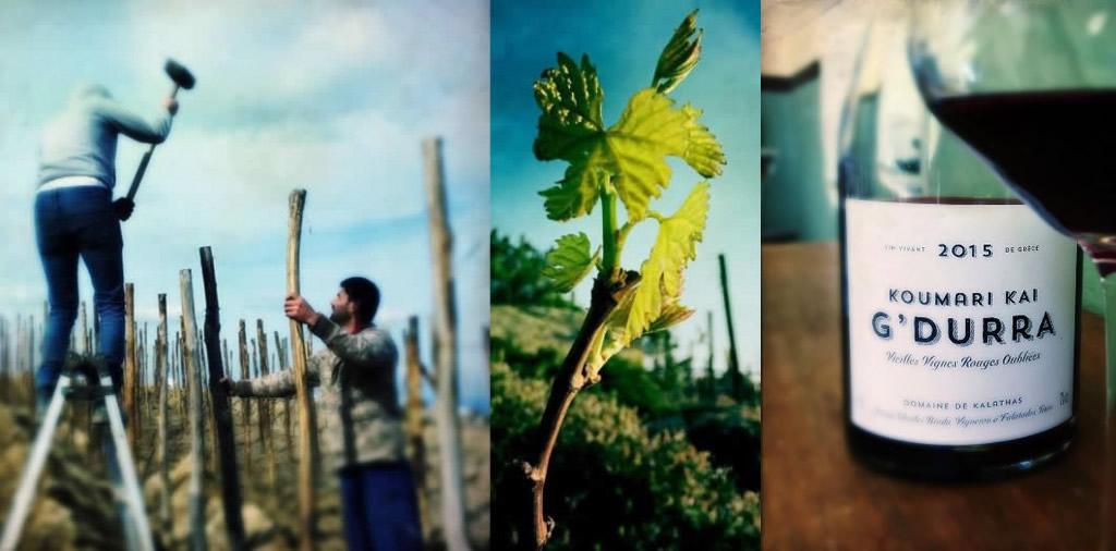 tinos, vineyards